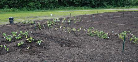 Planting Started2 071209