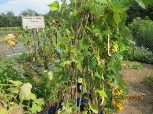 Master Gardeners' Demonstration Garden