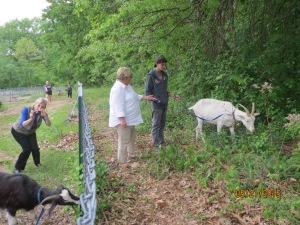 Food Pantry Manager Sue B. walks goat