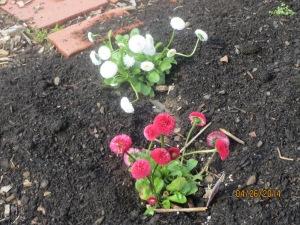 Spring flowers 4/26/2014